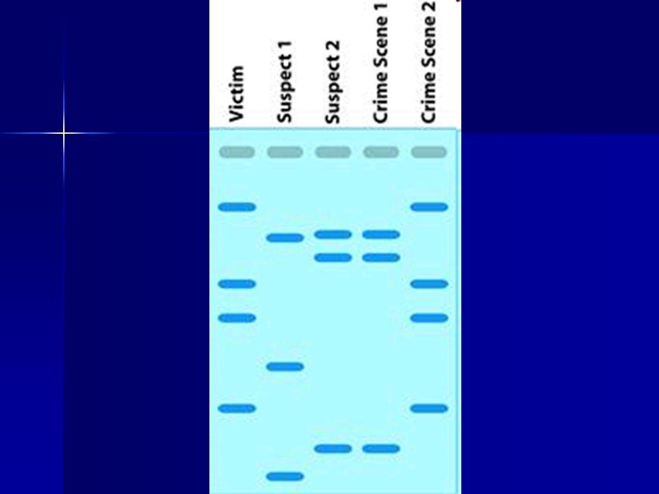 DNA Sources saliva, blood, seminal fluid, skin, hair saliva, blood, seminal fluid, skin, hair INDIVIDUAL EVIDENCE INDIVIDUAL EVIDENCE