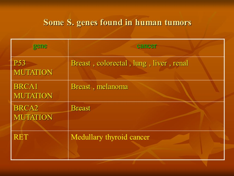 Some S. genes found in human tumors cancergene Breast, colorectal, lung, liver, renal P53 MUTATION Breast, melanoma BRCA1 MUTATION Breast BRCA2 MUTATI