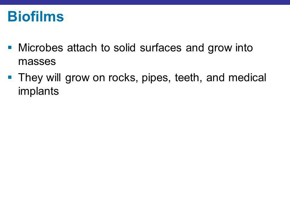 Biofilms Microbes attach to solid surfaces and grow into masses They will grow on rocks, pipes, teeth, and medical implants