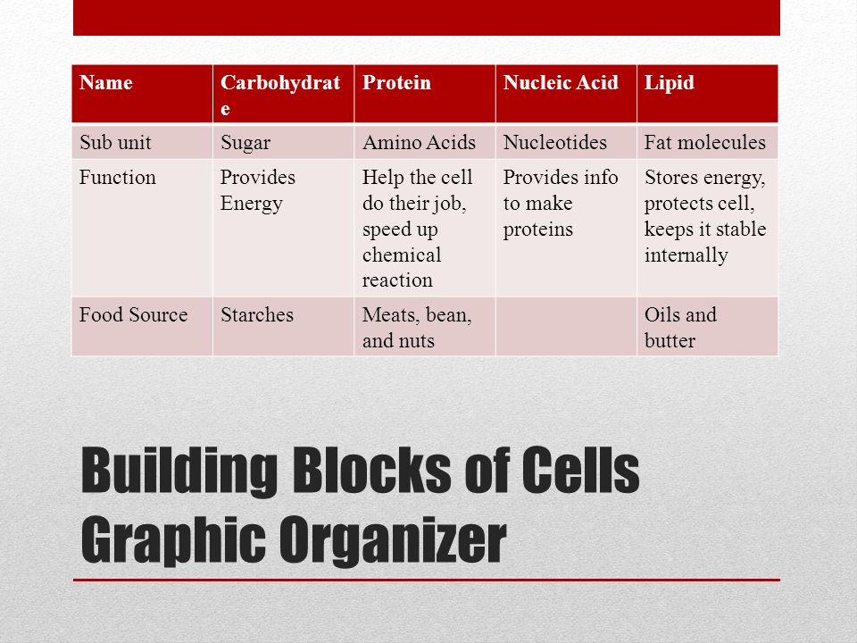 Building Blocks of Cells Graphic Organizer NameCarbohydrat e ProteinNucleic AcidLipid Sub unitSugarAmino AcidsNucleotidesFat molecules FunctionProvides Energy Help the cell do their job, speed up chemical reaction Provides info to make proteins Stores energy, protects cell, keeps it stable internally Food SourceStarchesMeats, bean, and nuts Oils and butter