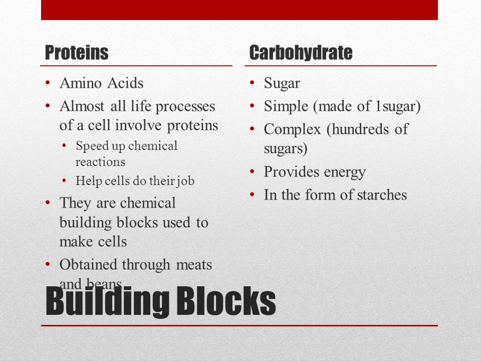 Building Blocks Proteins Amino Acids Almost all life processes of a cell involve proteins Speed up chemical reactions Help cells do their job They are chemical building blocks used to make cells Obtained through meats and beans Carbohydrate Sugar Simple (made of 1sugar) Complex (hundreds of sugars) Provides energy In the form of starches