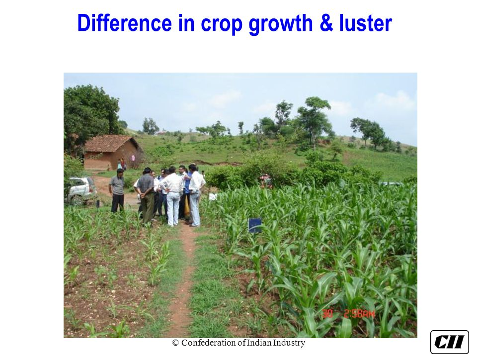 Difference in crop growth & luster © Confederation of Indian Industry
