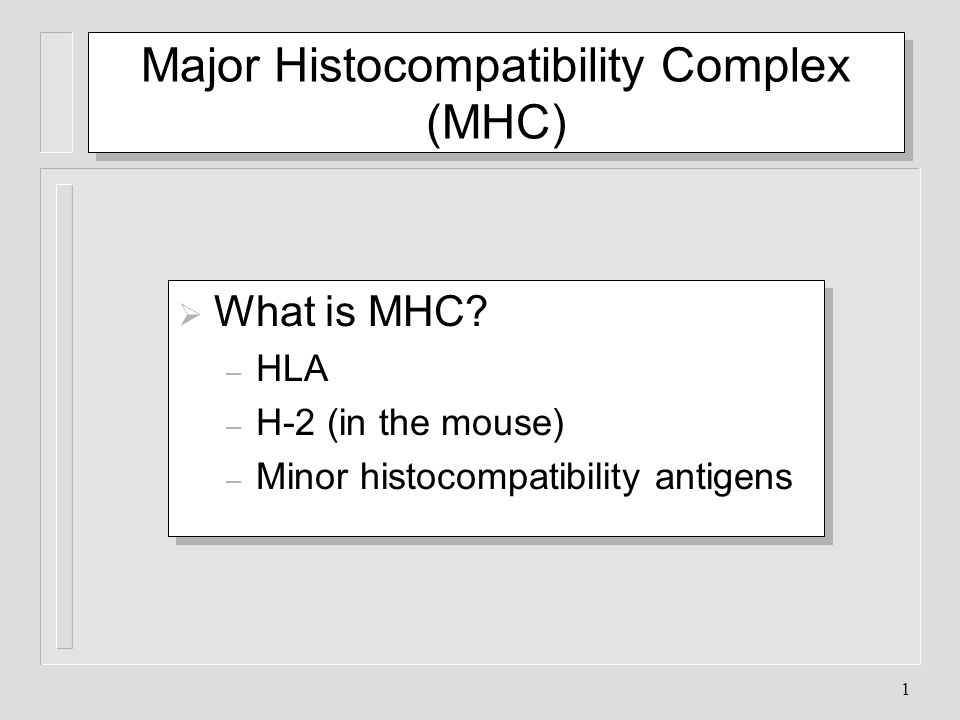 1 Major Histocompatibility Complex (MHC) What is MHC? – HLA – H-2 (in the mouse) – Minor histocompatibility antigens What is MHC? – HLA – H-2 (in the
