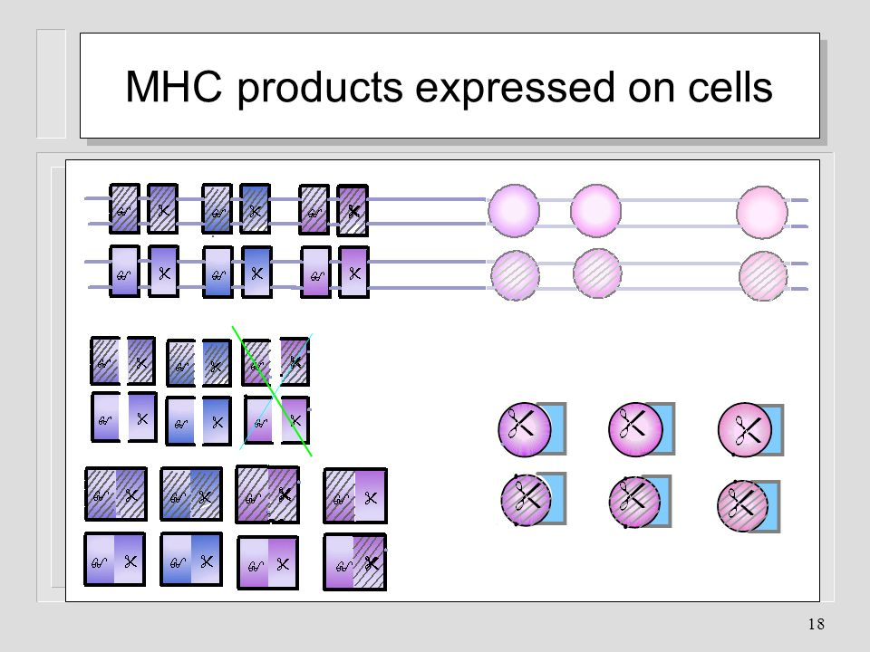 18 MHC products expressed on cells