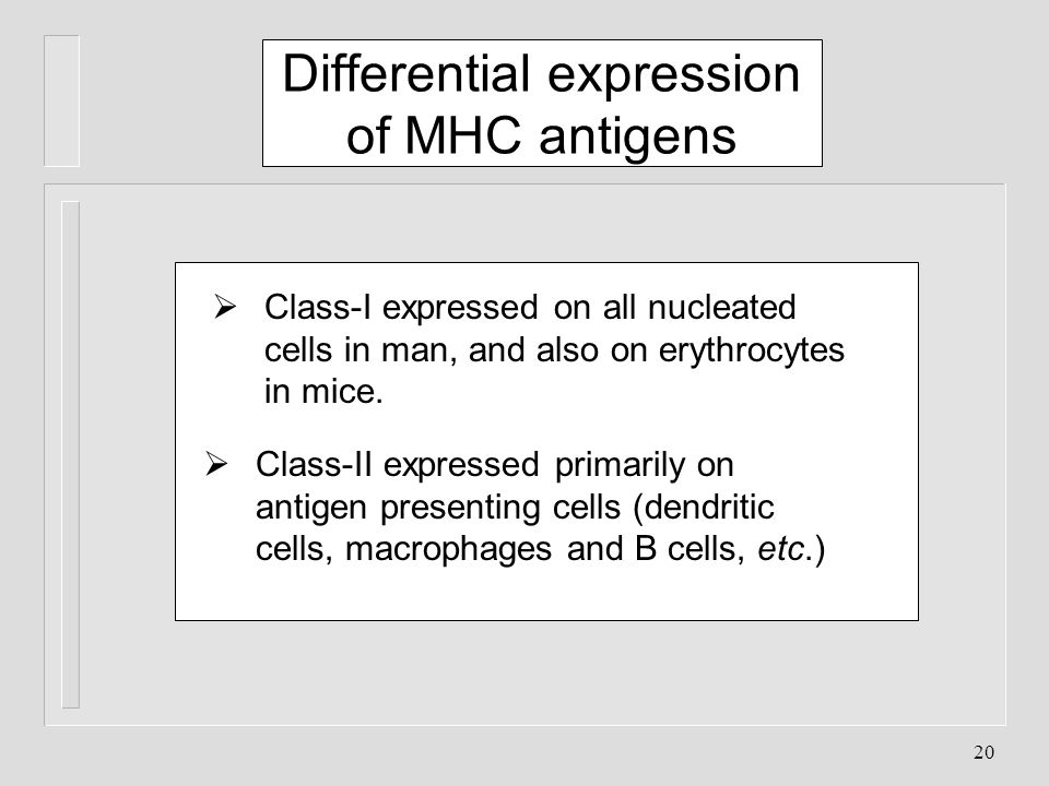 20 Class-I expressed on all nucleated cells in man, and also on erythrocytes in mice. Class-II expressed primarily on antigen presenting cells (dendri