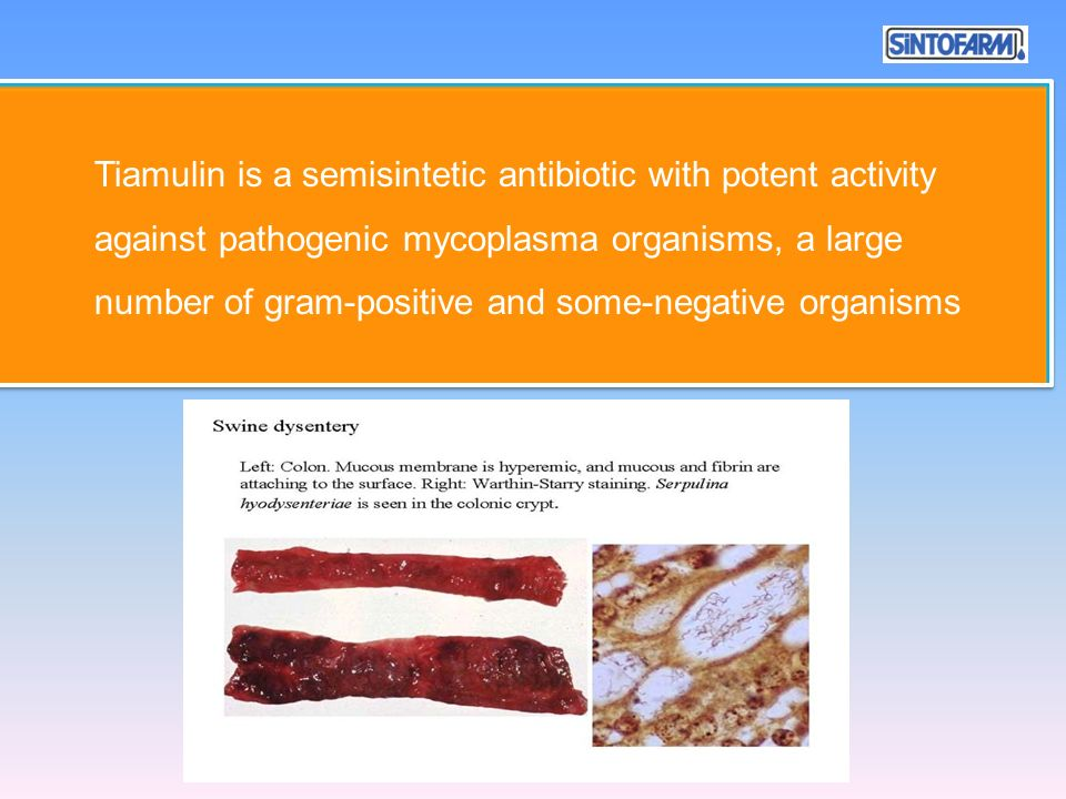 Tiamulin is a semisintetic antibiotic with potent activity against pathogenic mycoplasma organisms, a large number of gram-positive and some-negative