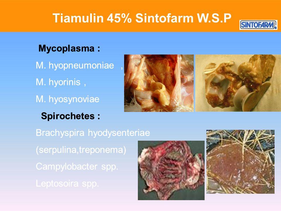 Tiamulin 45% Sintofarm W.S.P Mycoplasma : M. hyopneumoniae, M. hyorinis, M. hyosynoviae Spirochetes : Brachyspira hyodysenteriae (serpulina,treponema)