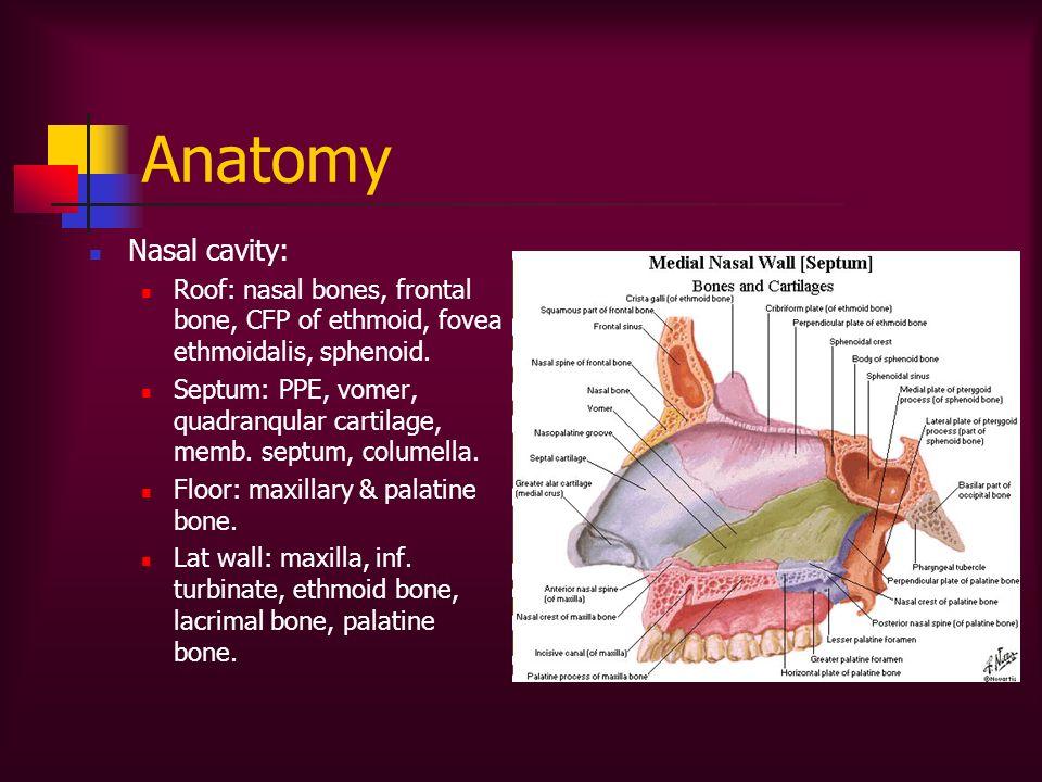 Anatomy Nasal cavity: Roof: nasal bones, frontal bone, CFP of ethmoid, fovea ethmoidalis, sphenoid. Septum: PPE, vomer, quadranqular cartilage, memb.