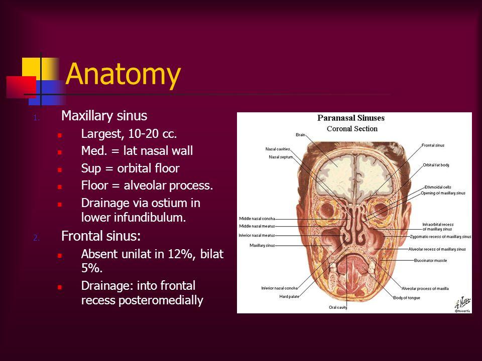 Anatomy 1. Maxillary sinus Largest, 10-20 cc. Med. = lat nasal wall Sup = orbital floor Floor = alveolar process. Drainage via ostium in lower infundi