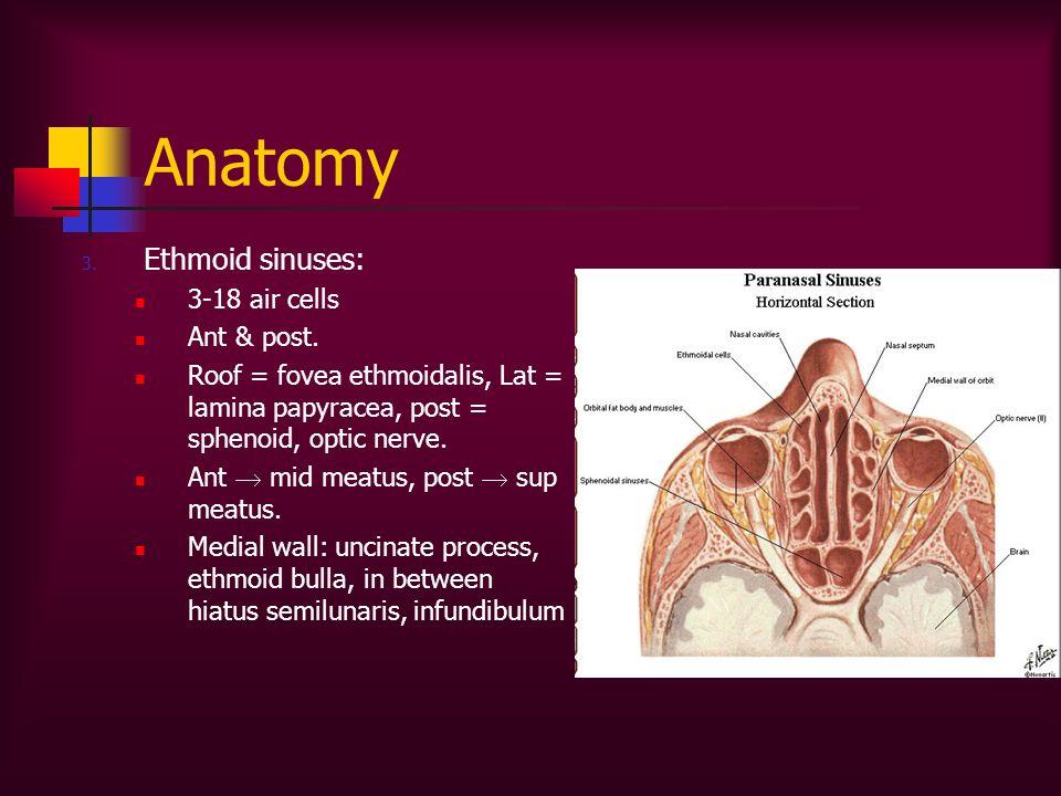 Anatomy 3. Ethmoid sinuses: 3-18 air cells Ant & post. Roof = fovea ethmoidalis, Lat = lamina papyracea, post = sphenoid, optic nerve. Ant mid meatus,