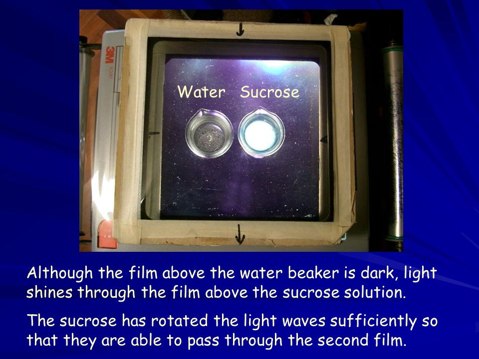 Water Sucrose Although the film above the water beaker is dark, light shines through the film above the sucrose solution.