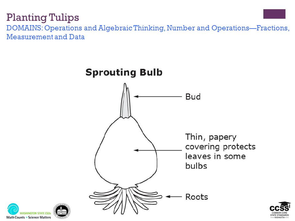 Planting Tulips DOMAINS: Operations and Algebraic Thinking, Number and OperationsFractions, Measurement and Data