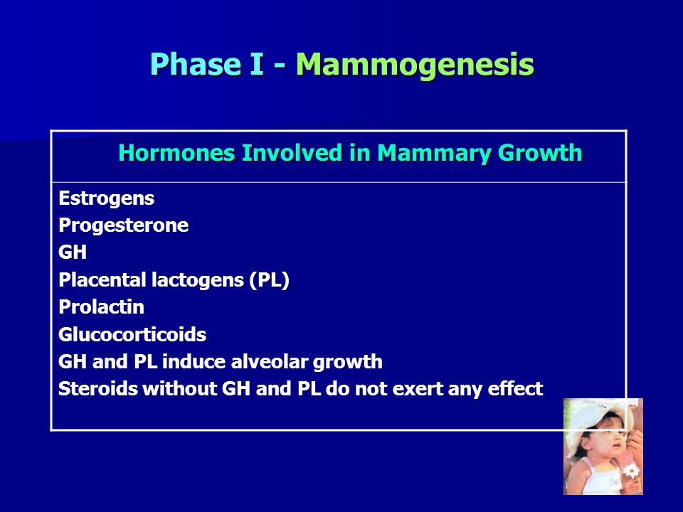 Phase I - Mammogenesis Hormones Involved in Mammary Growth Hormones Involved in Mammary Growth Estrogens Progesterone GH Placental lactogens (PL) Prol