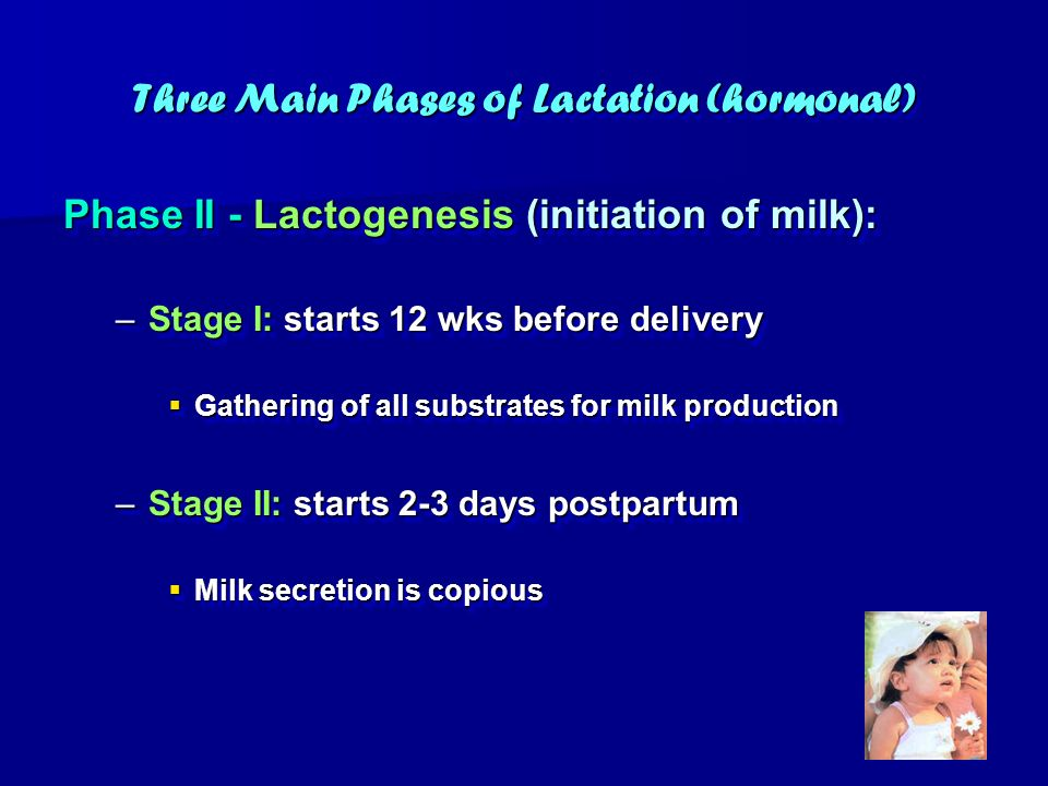 Three Main Phases of Lactation (hormonal) Phase II - Lactogenesis (initiation of milk): –Stage I: starts 12 wks before delivery Gathering of all subst