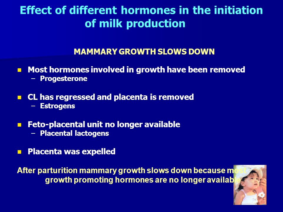 Effect of different hormones in the initiation of milk production MAMMARY GROWTH SLOWS DOWN Most hormones involved in growth have been removed – –Prog