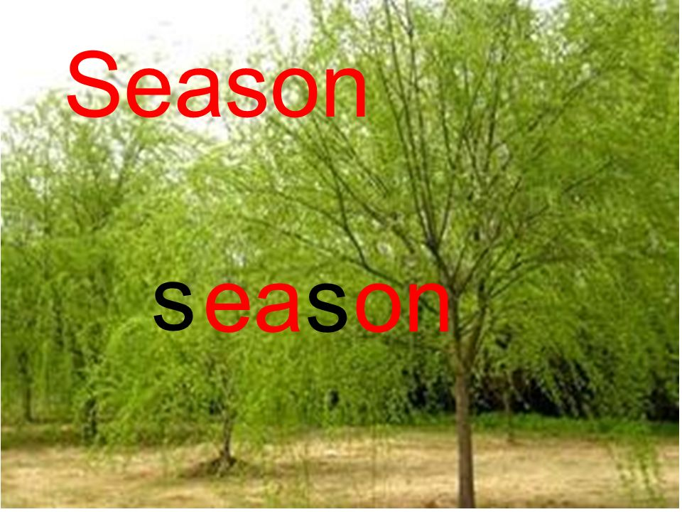 My Favourite Season Let chant