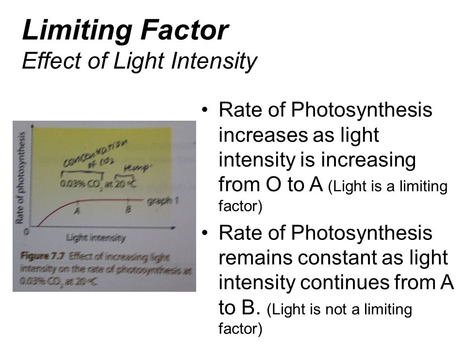 Limiting Factor Effect of Light Intensity Rate of Photosynthesis increases as light intensity is increasing from O to A (Light is a limiting factor) R