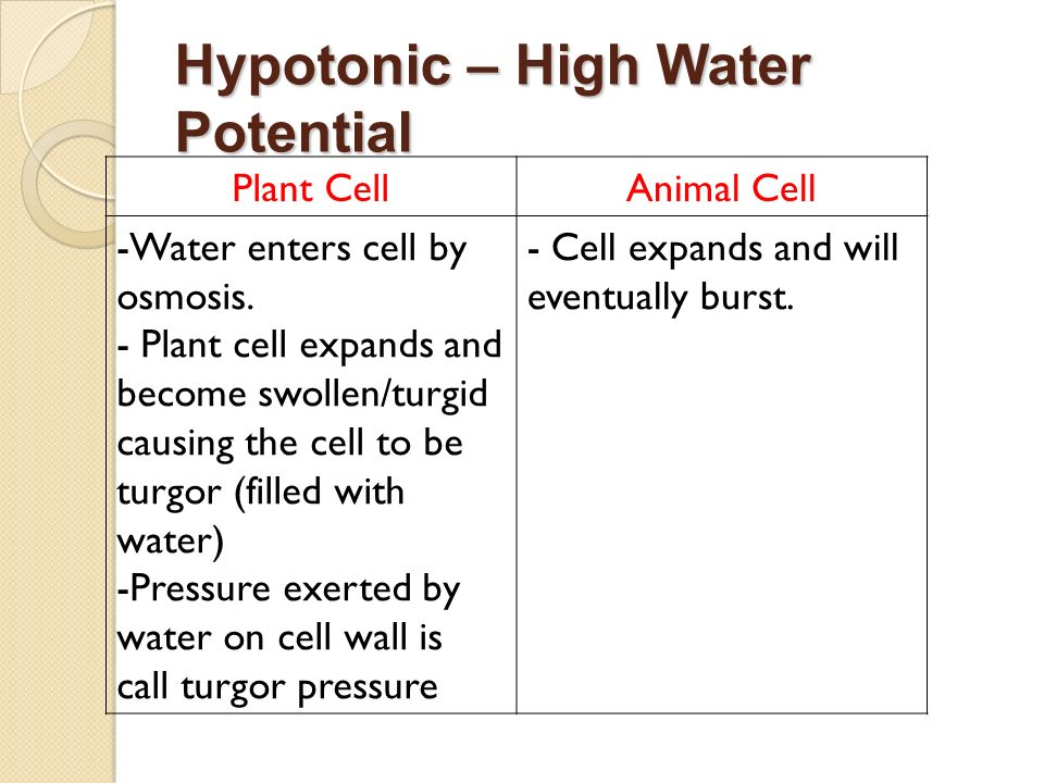 Hypotonic – High Water Potential Plant CellAnimal Cell -Water enters cell by osmosis. - Plant cell expands and become swollen/turgid causing the cell