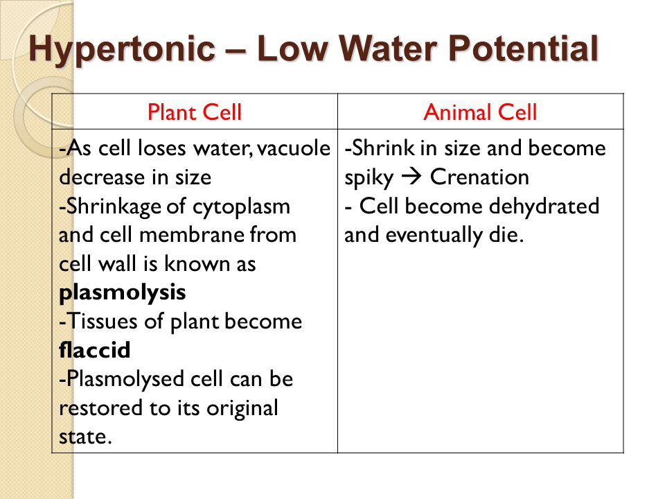 Hypertonic – Low Water Potential Plant CellAnimal Cell -As cell loses water, vacuole decrease in size -Shrinkage of cytoplasm and cell membrane from c