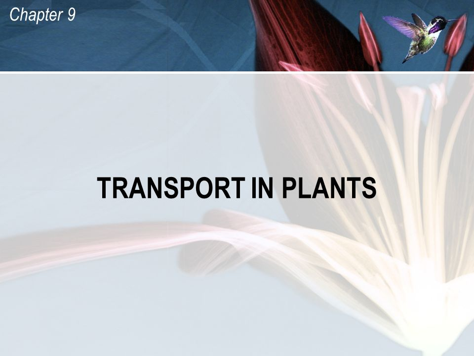 Chapter 9 TRANSPORT IN PLANTS