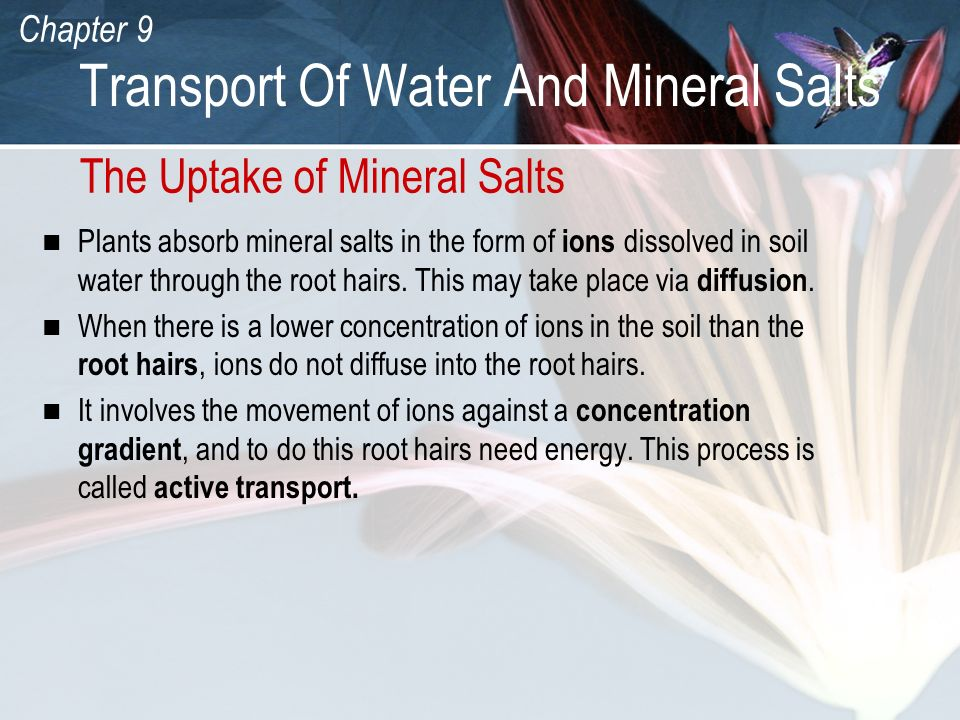 Chapter 9 Transport Of Water And Mineral Salts The Uptake of Mineral Salts Plants absorb mineral salts in the form of ions dissolved in soil water thr