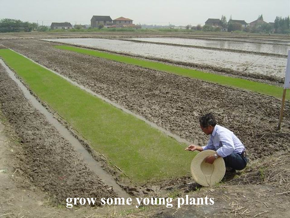 The measures taken to deal with hunger.Invent a new kind of plant to produce more food.