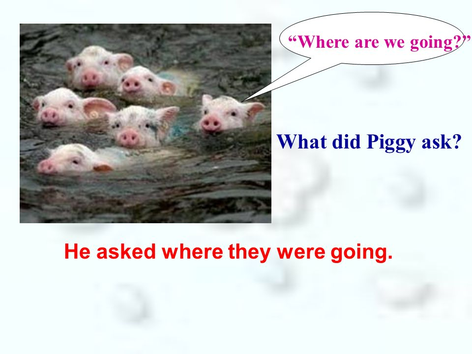 Where are we going? What did Piggy ask? He asked where they were going.