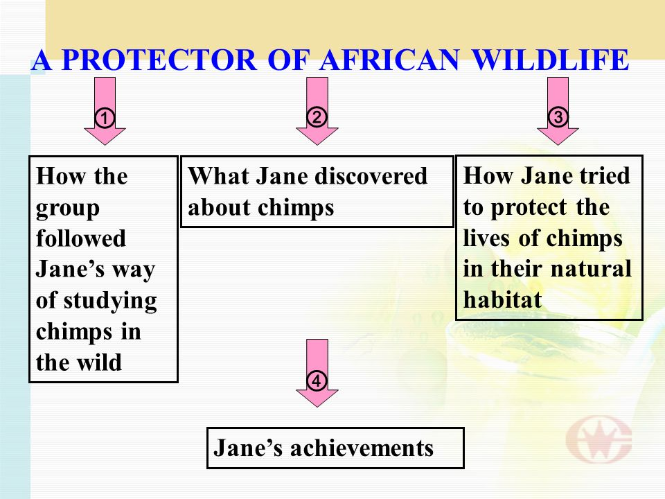 A PROTECTOR OF AFRICAN WILDLIFE What Jane discovered about chimps How Jane tried to protect the lives of chimps in their natural habitat Janes achievements How the group followed Janes way of studying chimps in the wild