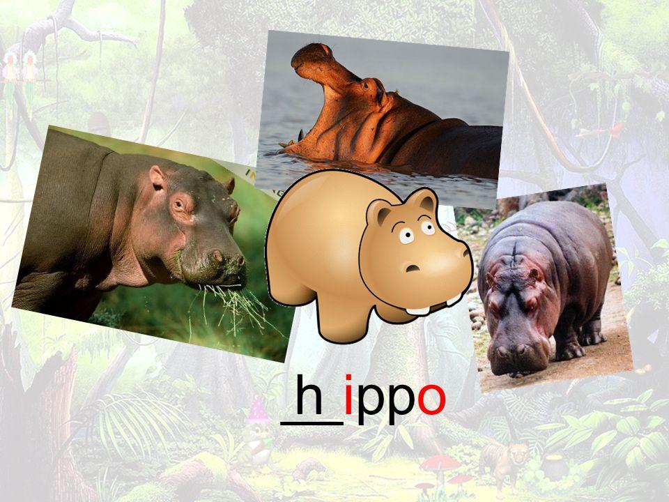 __ippoh