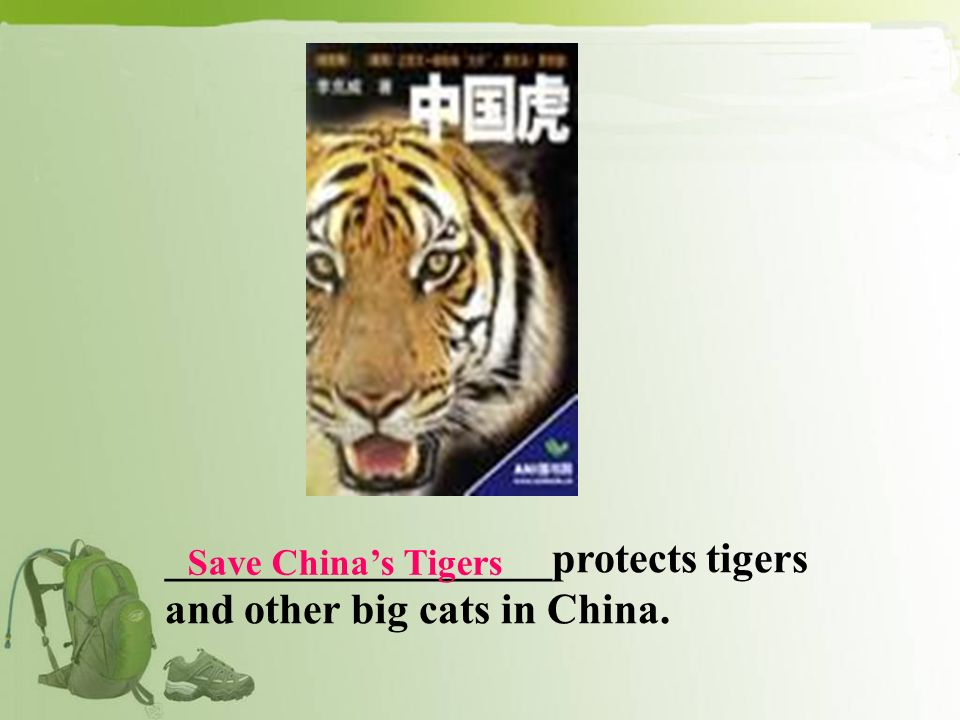 __________________protects tigers and other big cats in China. Save Chinas Tigers