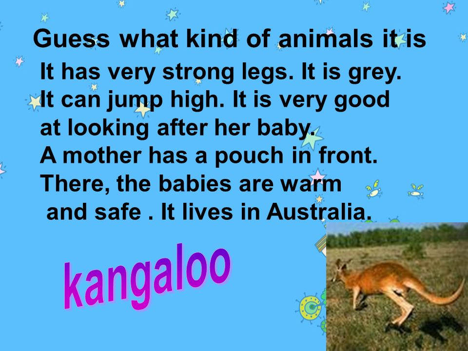 Guess what kind of animals it is 1.She is Koko. She can play with a ball. She can stand up and walk on water! She is very friendly to people. She is t