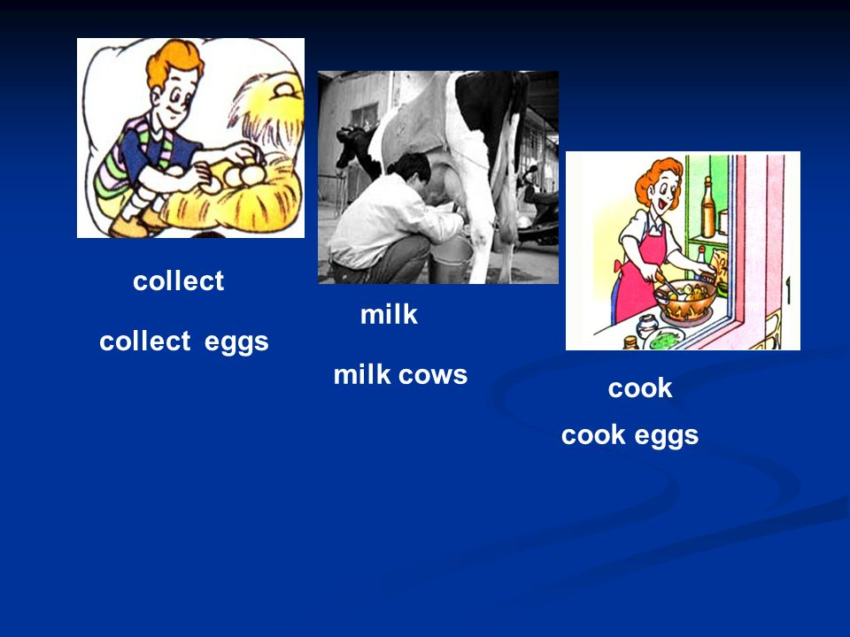 collect collect eggs milk milk cows cook cook eggs