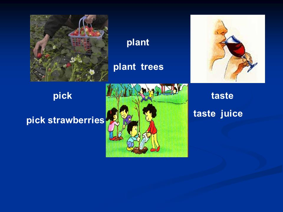 pick pick strawberries plant plant trees taste taste juice