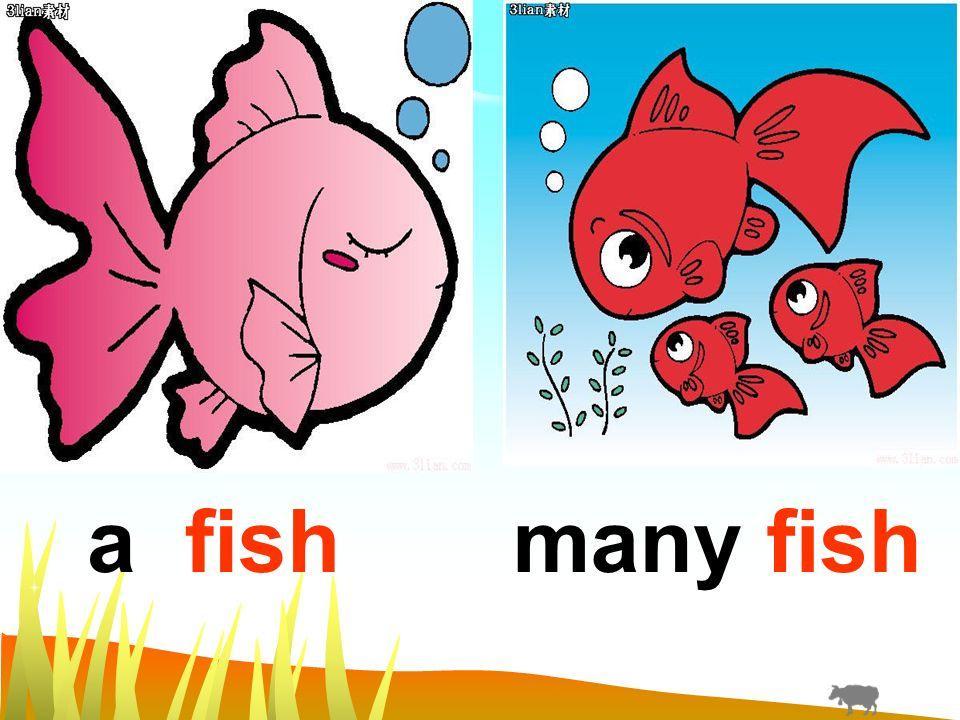 a fishmany fish