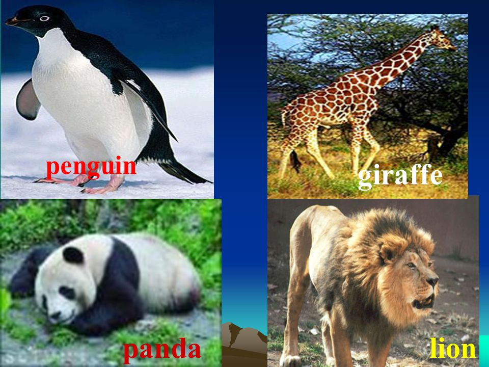 Do you know these animals dolphin tiger elephant koala
