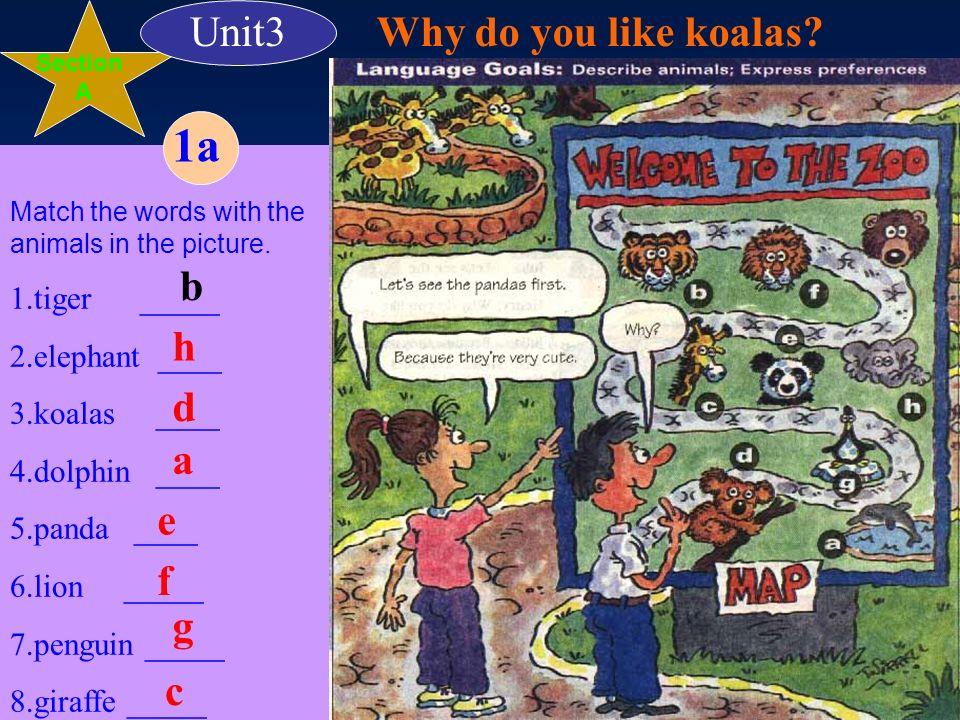 A: B: tigers elephants penguins lions Koalas dolphins giraffes pandas