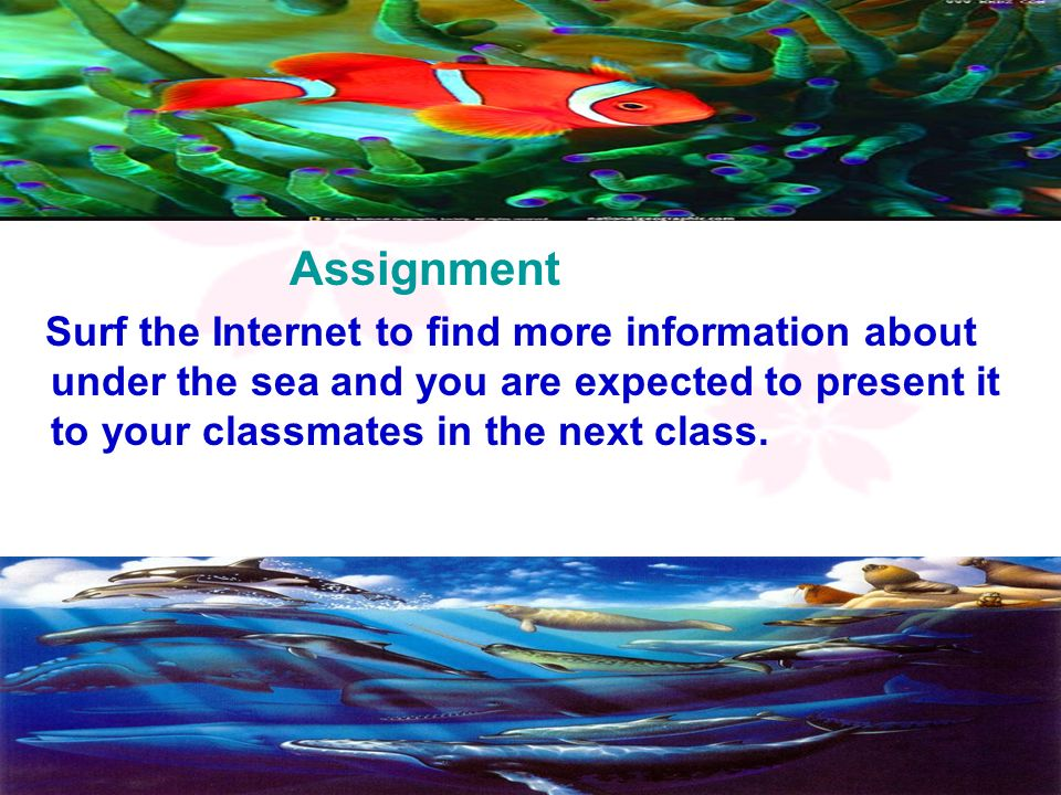 19 Assignment Surf the Internet to find more information about under the sea and you are expected to present it to your classmates in the next class.