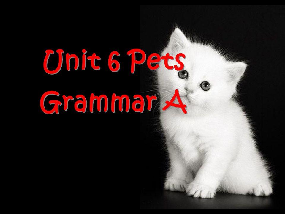 Unit 6 Pets Grammar A