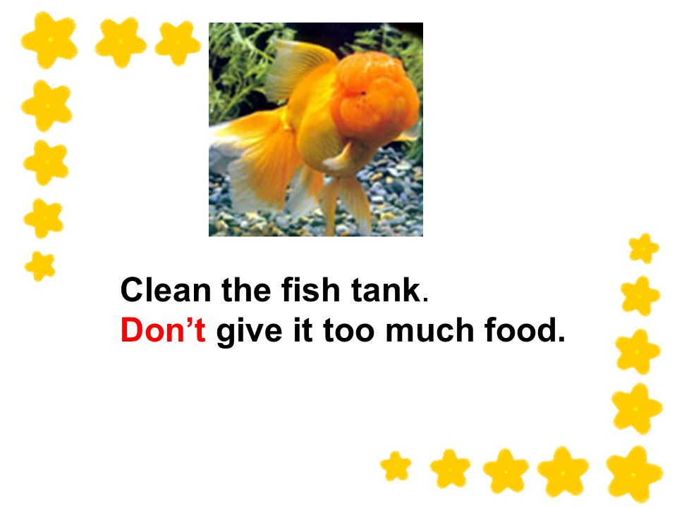 Clean the fish tank. Dont give it too much food.