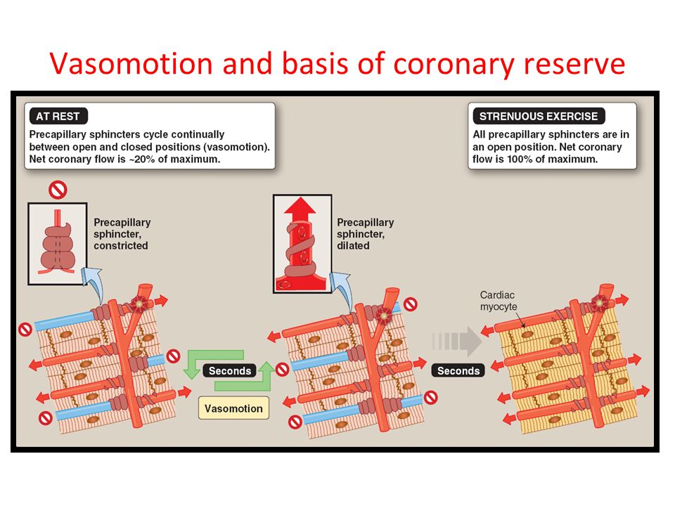 Vasomotion and basis of coronary reserve