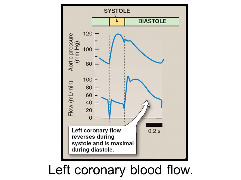Left coronary blood flow.