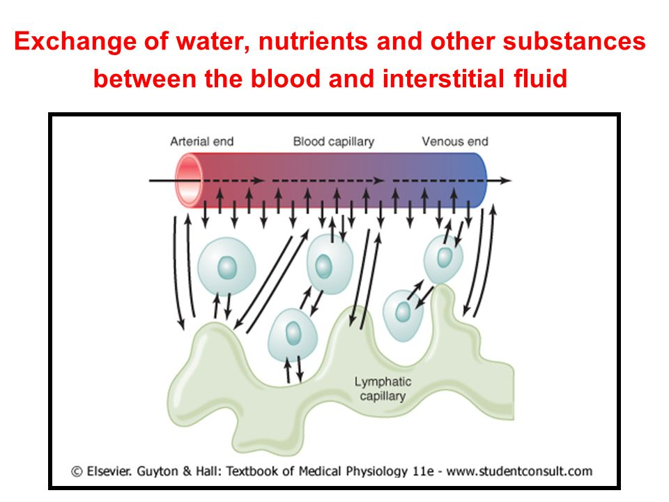 Exchange of water, nutrients and other substances between the blood and interstitial fluid