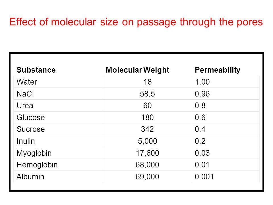 Effect of molecular size on passage through the pores SubstanceMolecular WeightPermeability Water181.00 NaCl58.50.96 Urea600.8 Glucose1800.6 Sucrose34