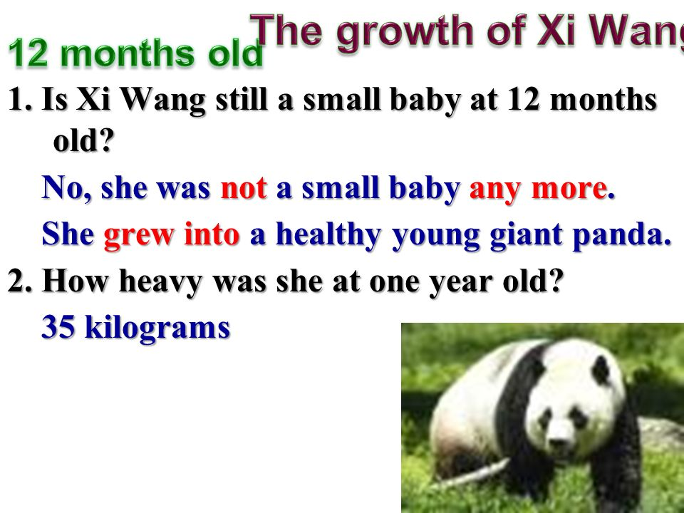 1. Is Xi Wang still a small baby at 12 months old.