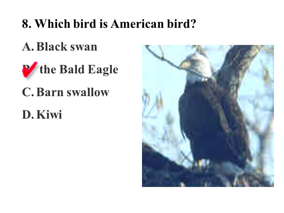 8. Which bird is American bird? A.Black swan B. the Bald Eagle C.Barn swallow D.Kiwi