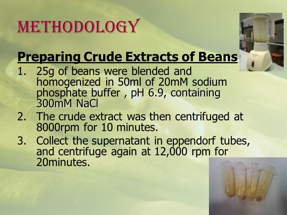 METHODOLOGY Preparing Crude Extracts of Beans, pH 6.9, containing 300mM NaCl 1.25g of beans were blended and homogenized in 50ml of 20mM sodium phosph