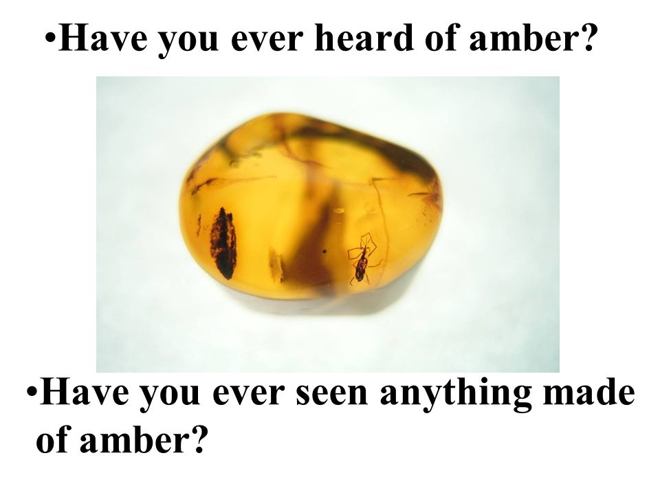 Have you ever seen anything made of amber? Have you ever heard of amber?