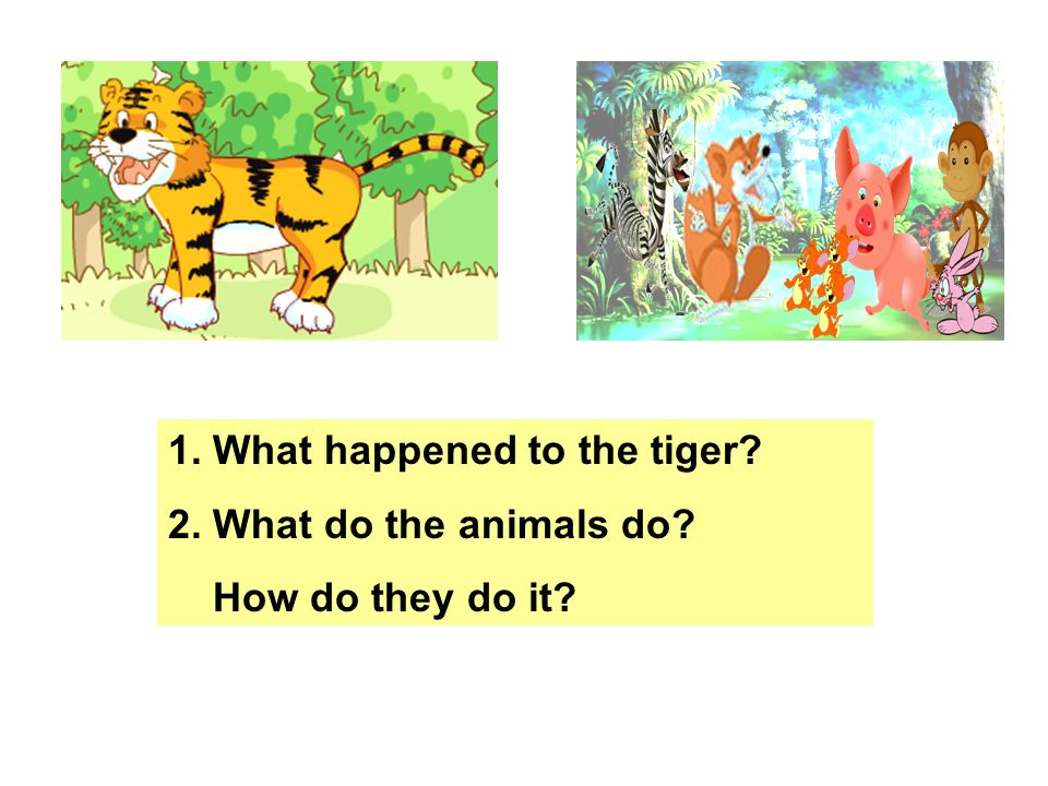 The fox gives the tiger many _____. The tiger _____ them very much. He ____ _____ every day. He thinks, sweet is the ____ ____ in the world. The fox g