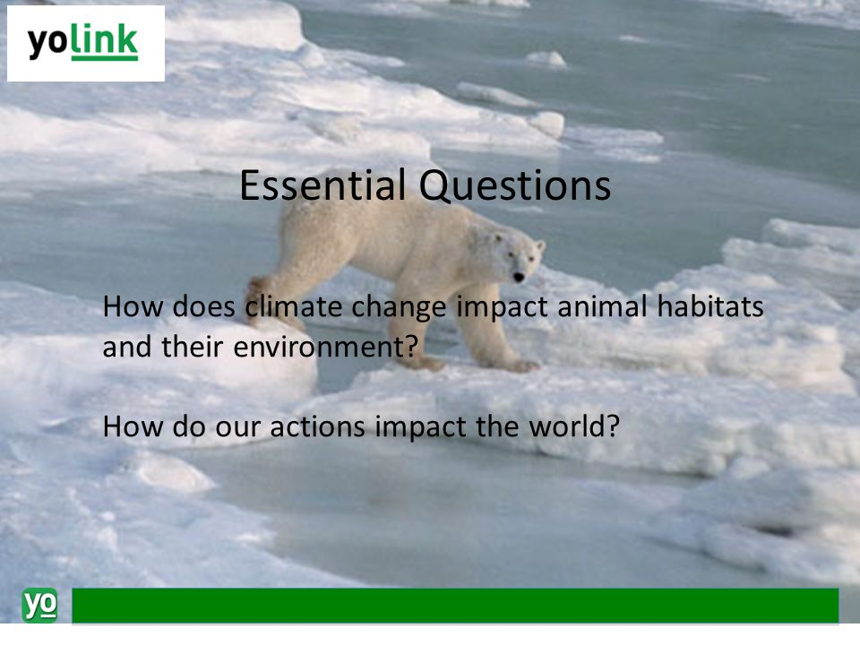 How does climate change impact animal habitats and their environment.