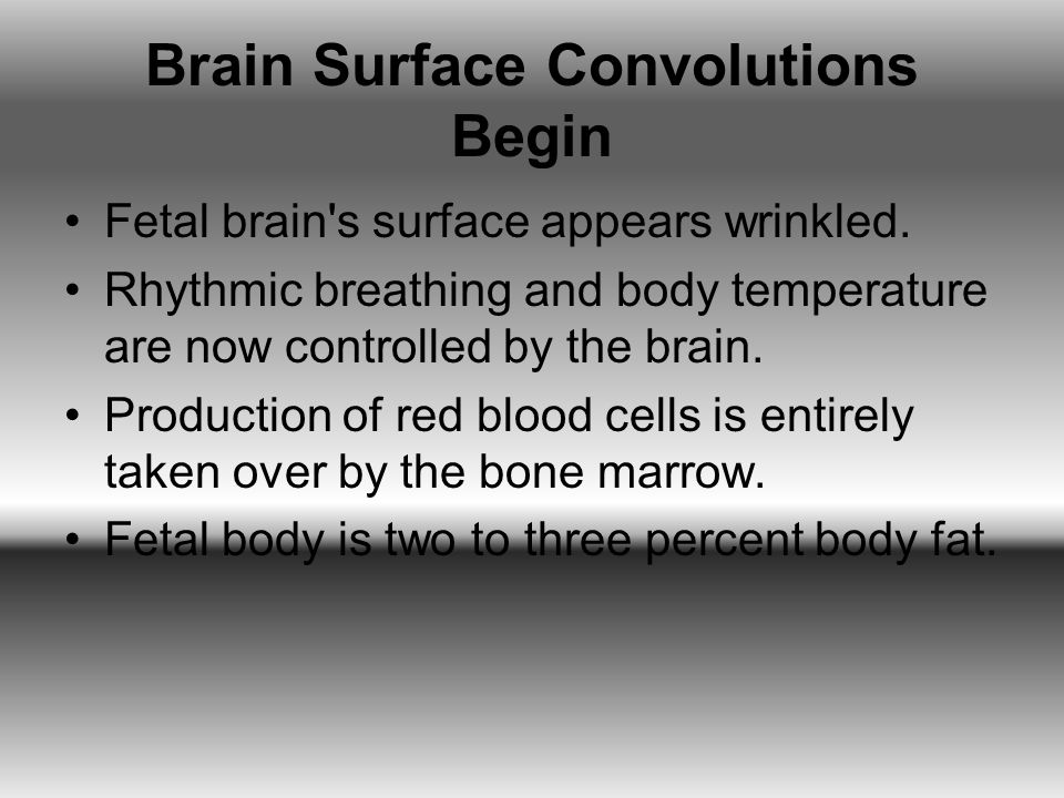 Brain Surface Convolutions Begin Fetal brain's surface appears wrinkled. Rhythmic breathing and body temperature are now controlled by the brain. Prod